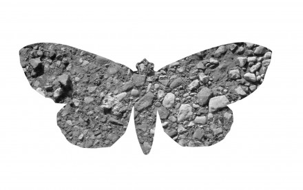 ian clegg photography the Urban Moth Project